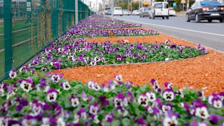 Mevsim çiçekleri Gaziantep'i süslüyor