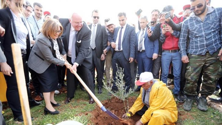 Türkiye'nin ilk zeytin ormanı
