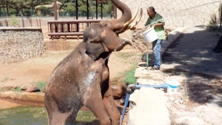 5 tonluk filler tazyikli suyla serinletiliyor