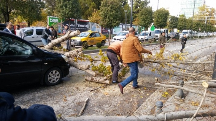 Devrilen ağaç seyir halindeki otomobilin üzerine düştü