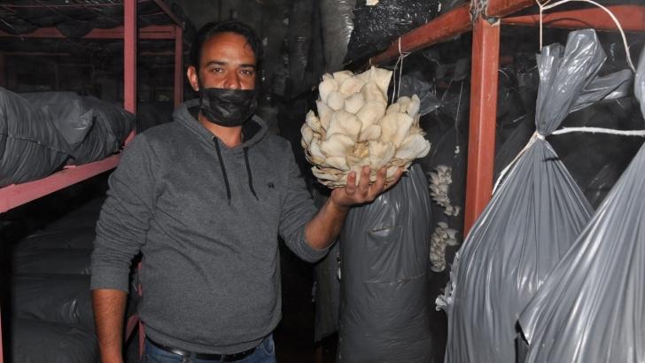 Tır şoförlüğünden mantar üretimine