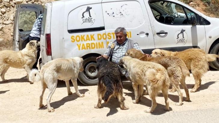 CAHİDE ile aç sokak hayvanı yok