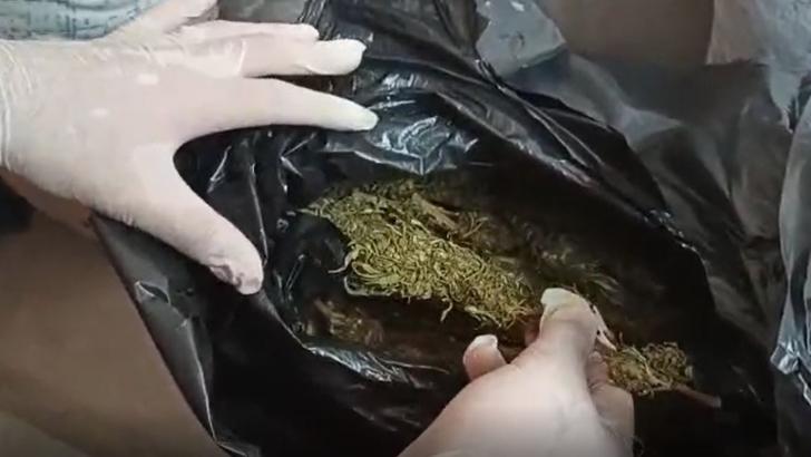 Bağ evinde 10 kilo 880 gram esrar ele geçirildi